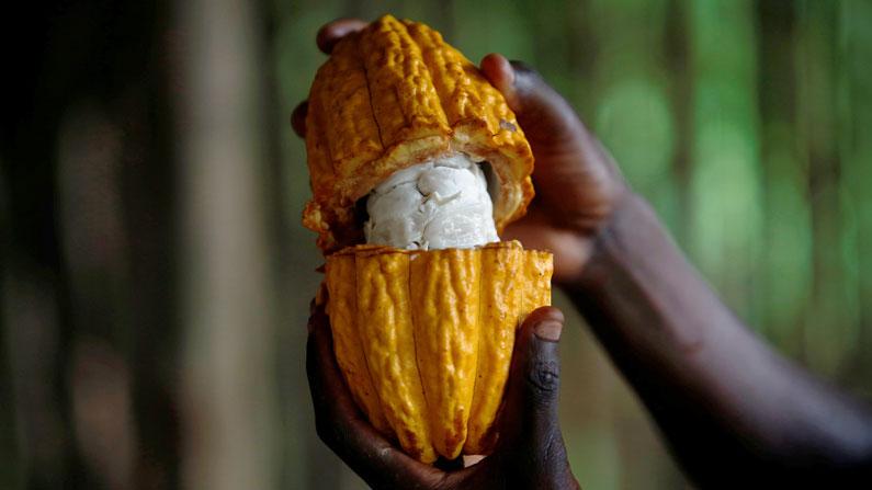 Mundo: Cambio climático y nuestra comida